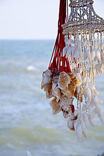 海边的贝壳
