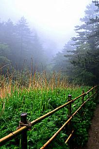 雾中围栏内的绿草