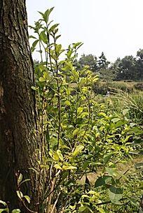 乡下路边树干上的小树枝
