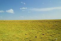 一望无际的大草原