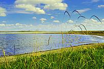 湖边的绿草