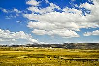蓝天白云下的玛曲草原