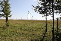 蓝天下草原中的松树和风能发电机