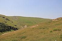 蓝天下的大草原