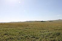 蓝天阳光下的大草原