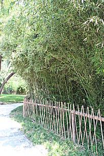 篱笆里面的竹林