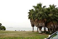 草地海边风景图