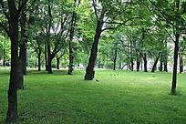 公园树木草地