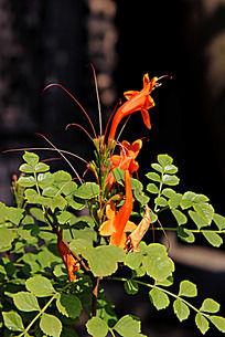 盛开的一株艳丽的红色小花