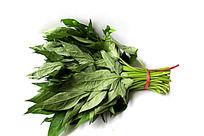 新鲜地瓜叶蔬菜