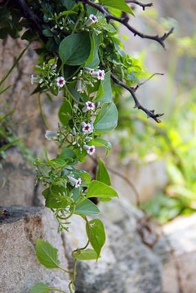 普陀山风景 花草 自然风景 摄影图片 植物特写