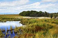 草丛中的小湖泊