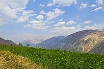 高山上绿色的庄稼