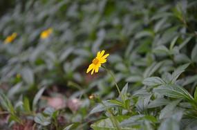 绿草中的小花
