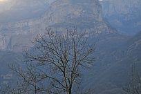 太行山冬天里光秃秃的树