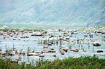 漳河水边风景