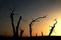 黄昏里怪树的剪影