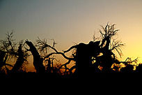 枯藤老树的黄昏