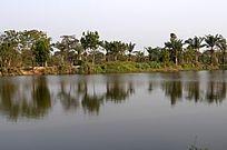 热带河边小树林