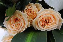 三朵绽放的玫瑰花