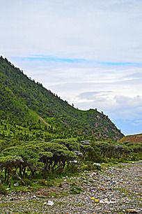 长满植被的山坡