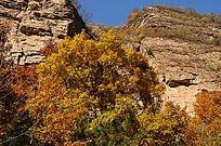 秋天太行山间的植被