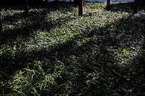 阳光下的草地