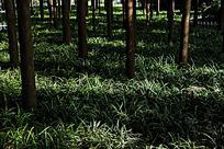 阳光下的绿色草地
