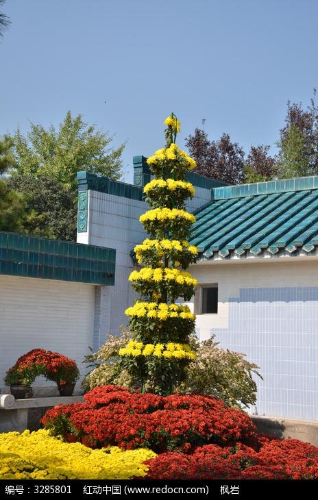 花色的菊花塔图片