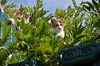 绿植后的两只猫咪特写
