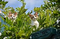 树丛中的两只猫咪特写
