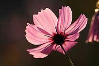 黑背景的红色小花