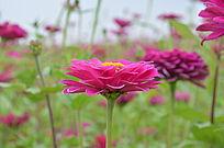 牛角大圩景区美丽的花朵