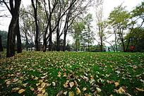 秋天的树林