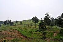 山坡上的绿色植被与小树