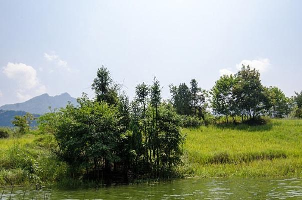襄阳保康县马桥水库孤岛上的植物