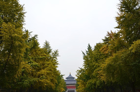 银杏大道建筑