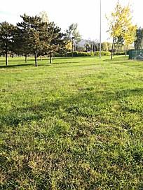 渐渐枯黄的草地