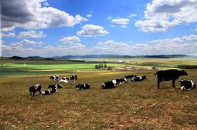 草原牛羊成群