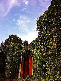 白色云彩天空下的红色门绿色叶子