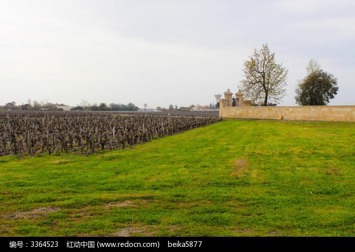 城堡边的葡萄园图片