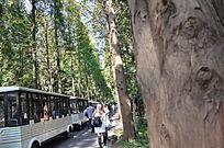 林间小道上的观光车