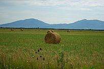 绿草地和稻草卷
