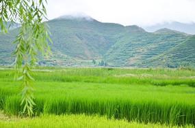 泸沽湖的沼泽风景