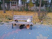 公园的流浪猫