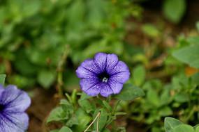紫色小花花朵
