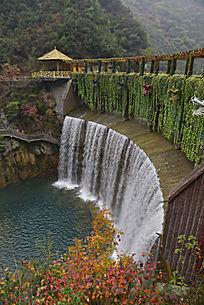 五龙河堤坝边上的枫叶