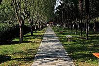 灰色的石板小路和绿色的小树林