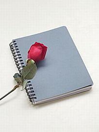 白色背景下的笔记本和红玫瑰图片