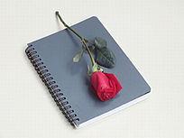 笔记本和红玫瑰特写图片